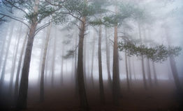 Foggy forest in autumn Stock Photography
