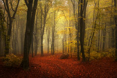 Foggy forest during autumn Royalty Free Stock Photos