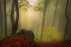 Foggy forest during autumn Stock Image