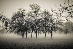 Foggy Forest. A forest in the autumn fog Stock Image