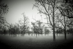 Foggy Forest. A forest in the autumn fog Royalty Free Stock Images