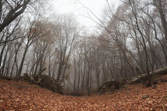 Foggy forest. Autumn forest with fog among trees and a lot of fallen leaves Stock Photo