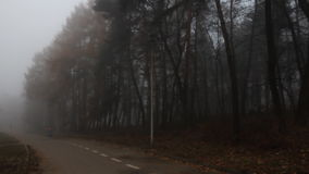 Foggy forest in the autumn, low angle view stock video