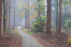 Foggy forest during autumn Stock Photo