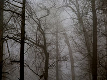 Foggy Forest Background Stock Image