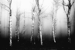 Foggy  forest in black and white Stock Image
