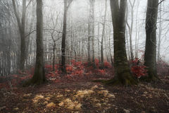 Foggy forest during a cold winter day Stock Photo