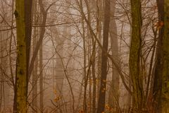 Foggy Forest Stock Photo