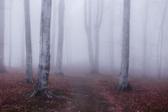 Foggy forest. Dark scary forest like a fairy tale Royalty Free Stock Photo