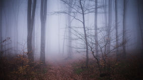 Foggy forest. Dark scary forest like a fairy tale Stock Photo