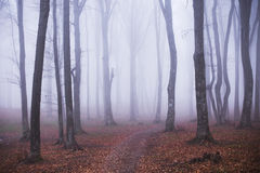 Foggy forest. Dark scary forest like a fairy tale Royalty Free Stock Photography