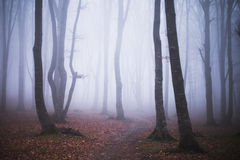 Foggy forest. Dark scary forest like a fairy tale Stock Photography