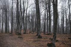 Foggy forest. Dark scary forest like a fairy tale Stock Image