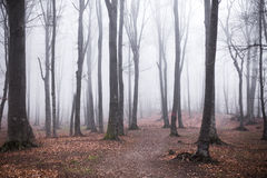 Foggy forest. Dark scary forest like a fairy tale Royalty Free Stock Image