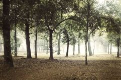 Foggy forest at day royalty free stock image