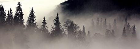 Foggy forest - depression Royalty Free Stock Image