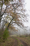 Foggy forest detail Royalty Free Stock Photo