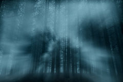 Foggy forest at dusk Royalty Free Stock Photography