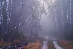 Foggy forest. Ear;y morning in the forest Stock Photo