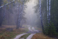 Foggy forest. Early morning in the foggy forest Stock Photo