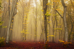 Foggy forest during fall Royalty Free Stock Images