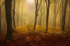 Foggy forest during fall Stock Photo