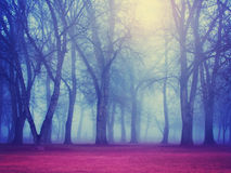 A foggy forest during fall toned with a retro vintage instagram Stock Photography