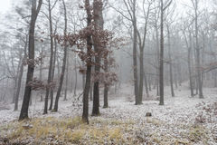 Foggy Forest. First Snow in Autumn. Long Time Exposure stock image