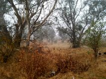 Foggy forest. Fog in a forest Royalty Free Stock Image