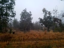 Foggy forest. Fog in a forest royalty free stock images