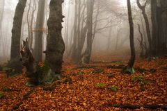 Foggy forest in Giant mountains royalty free stock images
