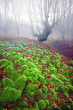 Foggy forest  with green sedimentary rocks with bubble shape Royalty Free Stock Image