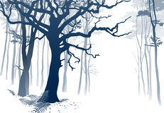 Foggy Forest. Hand drawn vector illustration of a misty woodland scenery with grandiose oak tree and ferns Royalty Free Stock Photos