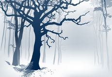 Foggy Forest. Hand drawn vector illustration of a misty woodland scenery with grandiose oak tree and ferns Stock Photography