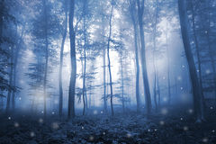 Foggy forest with illustrated snowflakes Stock Images