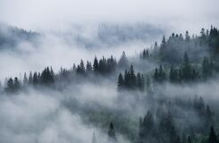 Free Foggy Forest In The Mountains. Landscape With Trees And Mist. Landscape After Rain. A View For The Background. Royalty Free Stock Images - 187800819