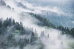 Free Foggy Forest In The Mountains. Landscape With Trees And Mist. Landscape After Rain. A View For The Background. Stock Image - 216044071