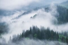 Free Foggy Forest In The Mountains. Landscape With Trees And Mist. Landscape After Rain. A View For The Background. Stock Photography - 216044112