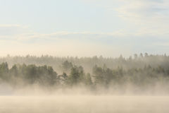 Foggy forest and lake at dawn. Finland Stock Photo