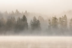 Foggy forest and lake at dawn. Finland Stock Photos