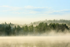 Foggy forest and lake at dawn stock image