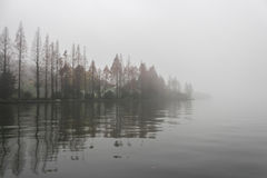 Foggy forest on the lake. royalty free stock photo