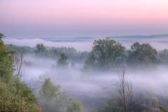Foggy Forest Landscape Stock Photos