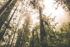 Foggy Forest Landscape Royalty Free Stock Photos