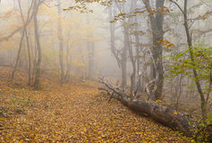Foggy forest landscape in Crimean mountains Royalty Free Stock Image