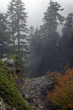 Foggy Forest on Larch Mountain. Shot down the ridge into the fog on Larch Mountain in Oregon Stock Photo