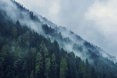 Foggy forest in the morning. Austria royalty free stock photography