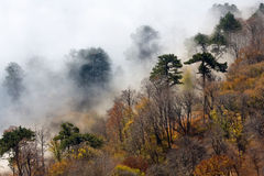 Foggy forest in mountains Royalty Free Stock Images
