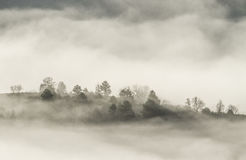 Foggy forest. Mysterious forest covered by fog in the early morning Stock Photos