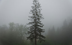 Foggy forest Stock Photos